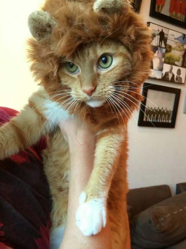 Lion Charlie